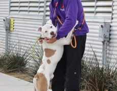 Animal Foundation volunteer and dog on a walk