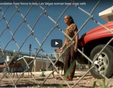 woman with dogs standing in front of truck
