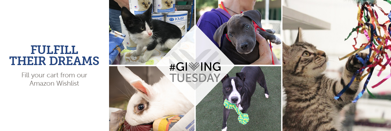 The Animal Foundation Giving Tuesday