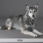 Allie Best in Show Dog