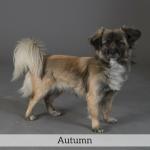 Autumn Best in Show Dog