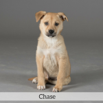 Chase Best in Show Dog