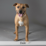 Dale Best in Show Dog