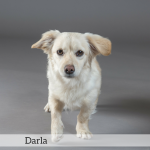Darla Best in Show Dog
