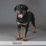 Denver Best in Show Dog