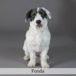 Fonda Best in Show Dog