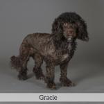Gracie Best in Show Dog