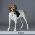 Hunter Best in Show Dog