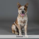 Jolene Best in Show Dog