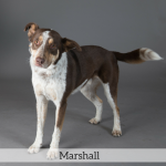 Marshall Best in Show Dog