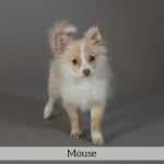 Mouse Best in Show Dog