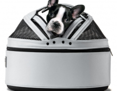 Car Safety Carrier for small dogs and cats