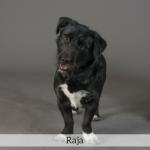 Raja Best in Show Dog