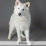 Romeo Best in Show Dog