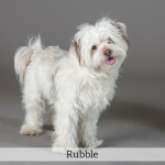 Rubble Best in Show Dog