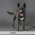 Ryder Best in Show Dog
