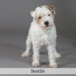 Seattle Best in Show Dog