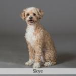 Skye Best in Show Dog