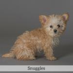 Snuggles Best in Show Dog