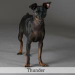 Thunder Best in Show Dog