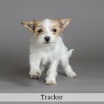 Tracker Best in Show Dog