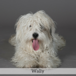 Wally Best in Show Dog