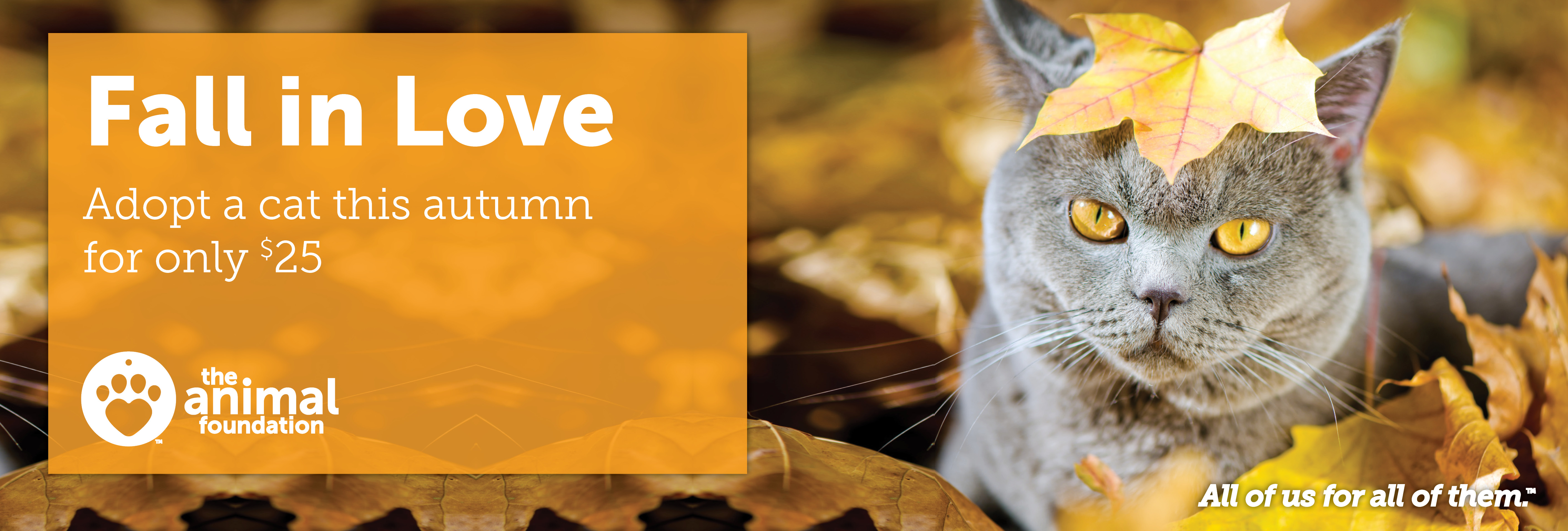 Fall in Love Cat Adoption Promotion