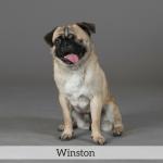 Winston Best in Show Dog