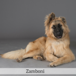 Zamboni Best in Show Dog