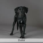 Zuma Best in Show Dog