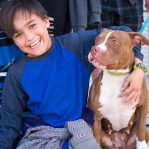 Boy with his arm around a pit bull terrier