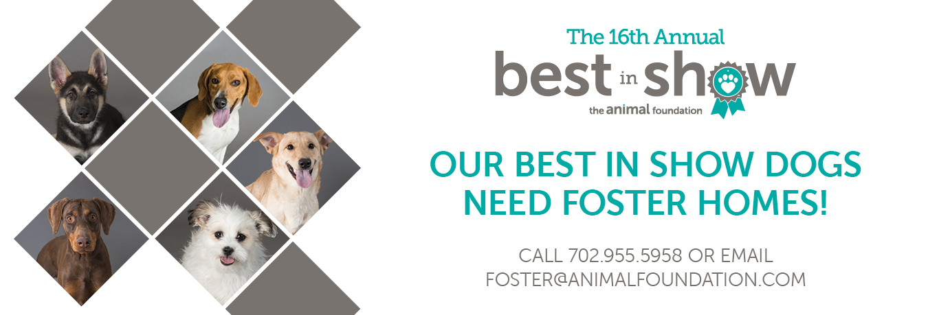 Foster BIS