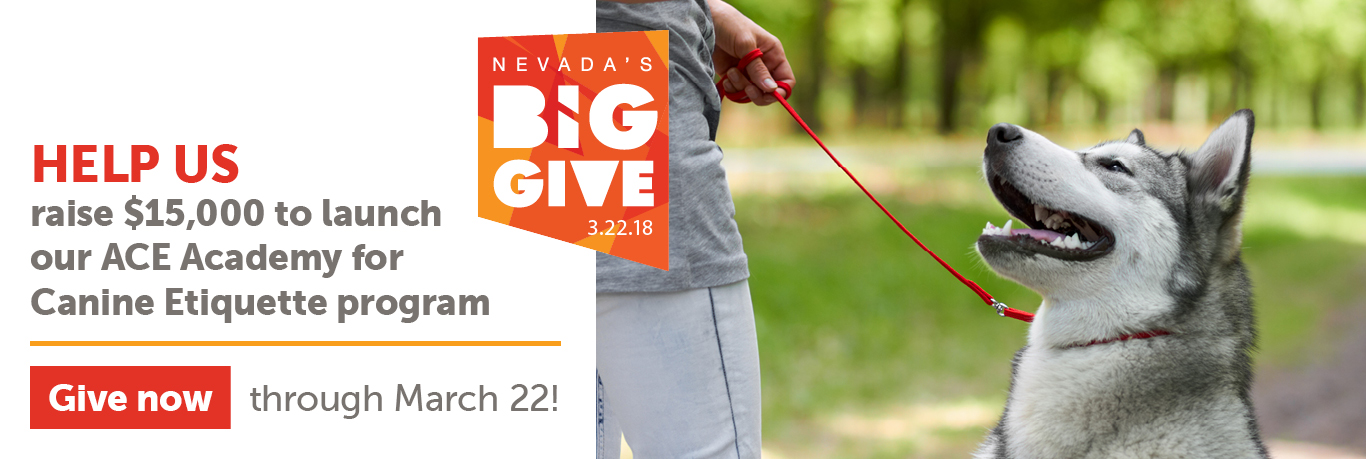 Nevada's Big Give