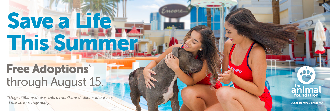 Adoption Promotion – Save a Life This Summer