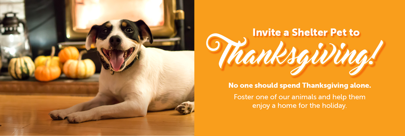 Thanksgiving Foster Promotion for The Animal Foundation