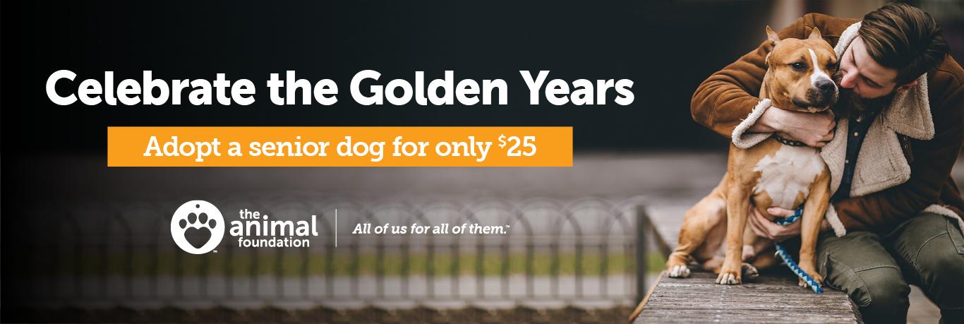 Senior Dog Promotion