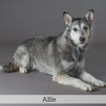 Allie Best in Show Dog