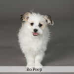 Bo Peep Best in Show Dog