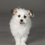 Bo Peep Best in Show Dog