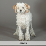 Bunny Best in Show Dog