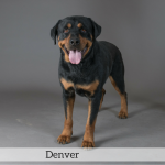 Denver Best in Show Dog