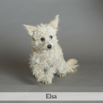Elsa Best in Show Dog