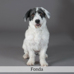 Fonda Best in Show Dog