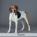 Hunter Best in Show Dog