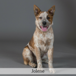 Jolene Best in Show Dog
