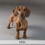 Mike Best in Show Dog