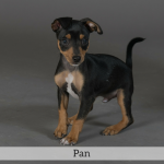 Pan Best in Show Dog