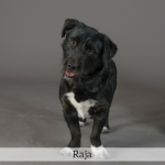 Raja Best in Show Dog