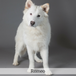 Romeo Best in Show Dog