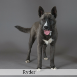 Ryder Best in Show Dog